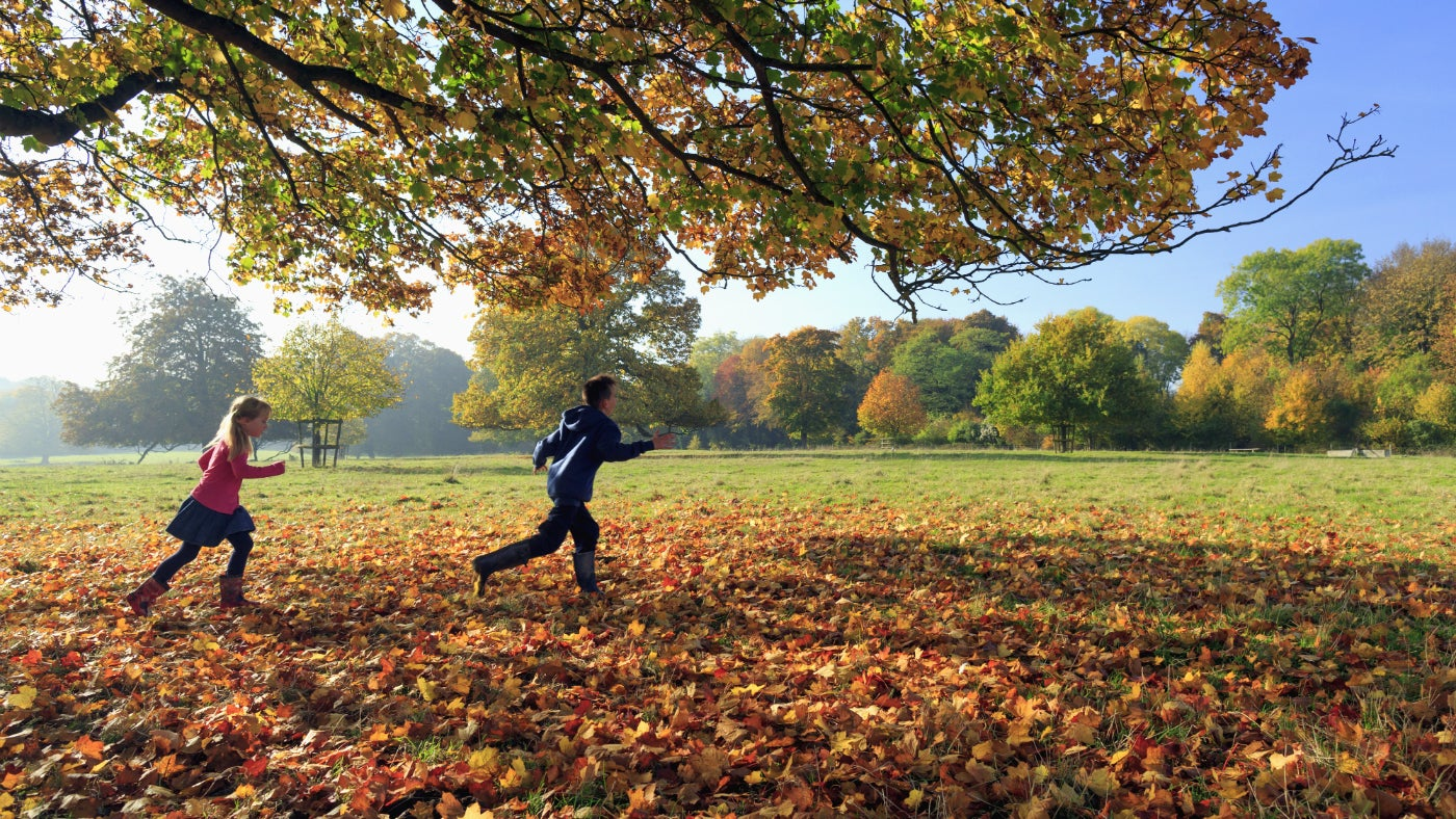 Children playing in autumn leaves that have dropped to the ground underneath a tree in the parkland