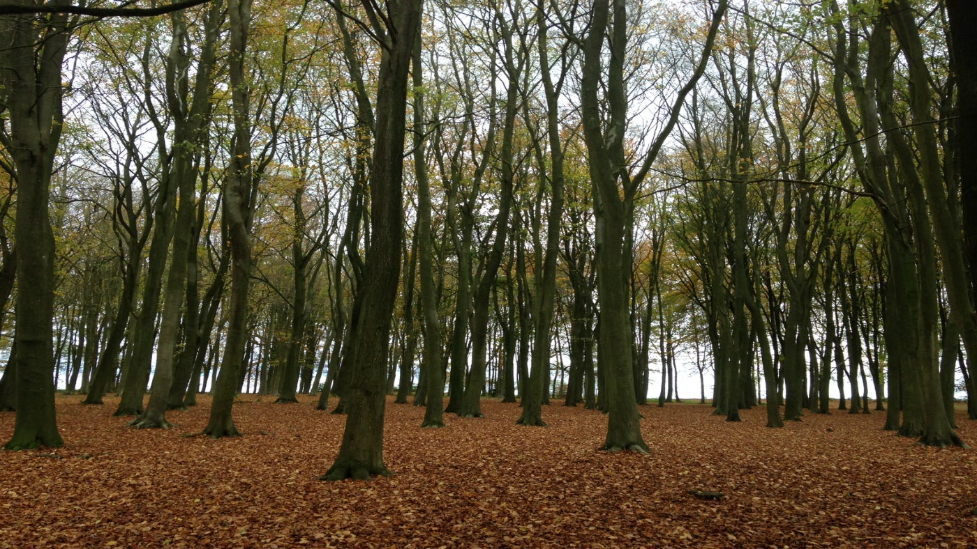 Ashdown woods with the ground covered in leaves