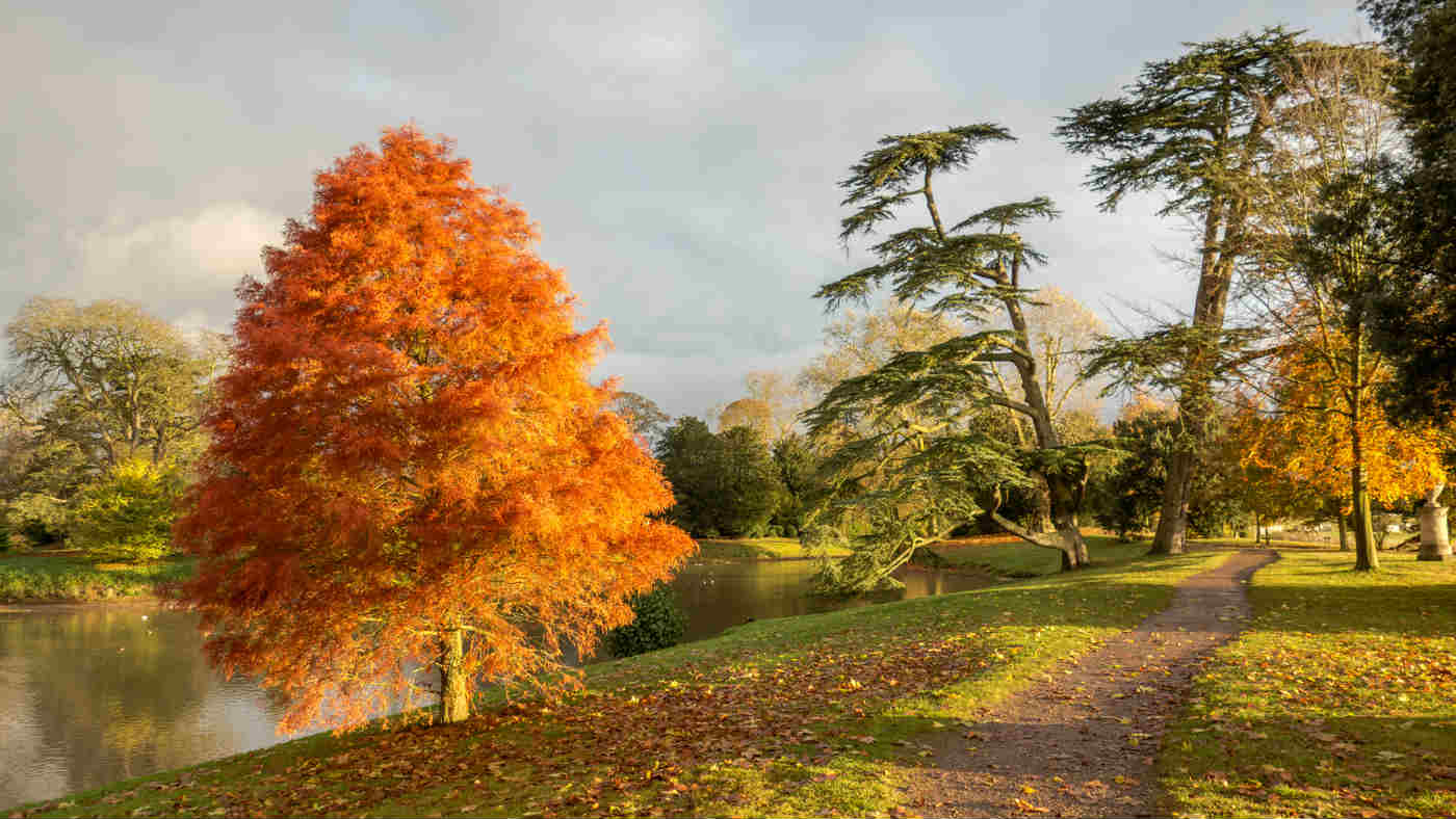 autumn colour around the lakeside