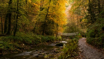 Suspension bridge in autumn with golden brown leaves on trees