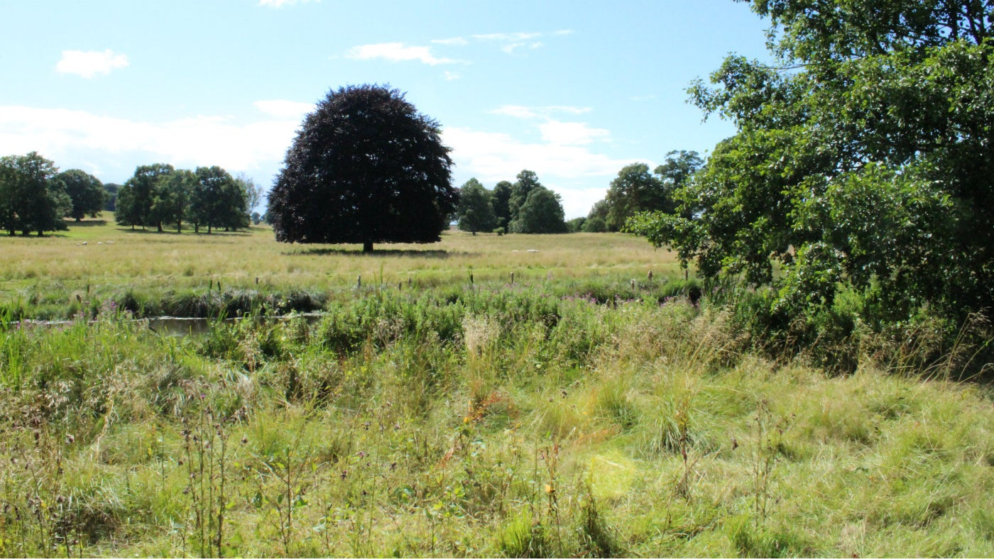 a view of the wilder side of kedleston, the wilderness walk