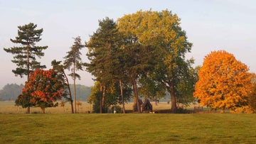 trees in autumn colour in the parkland