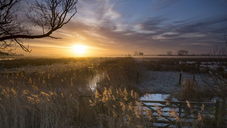A view of Wicken Fen at sunset