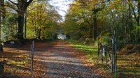 Dunsland gates in autumn