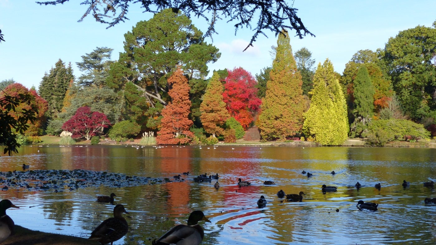 Autumn colours in the sunshine at Sheffield Park, Sussex