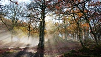 Ashness Woods in autumn sun, Borrowdale, Lake District