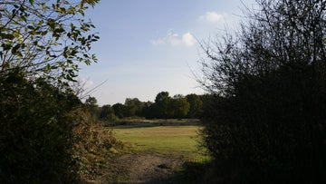 A view across Danbury common in autumn sunshine