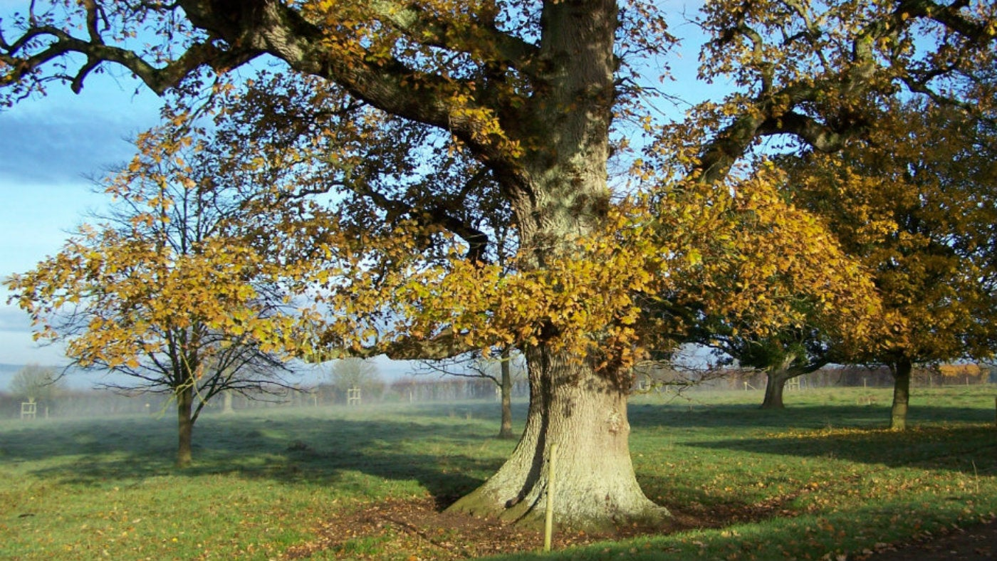 Lytes Cary estate in autumn