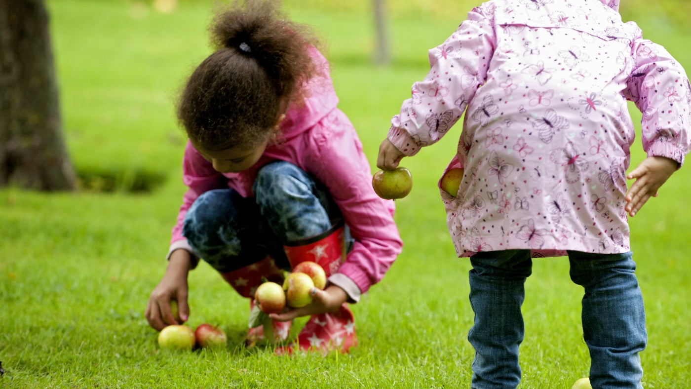 Children collecting wind-fall apples in the orchard