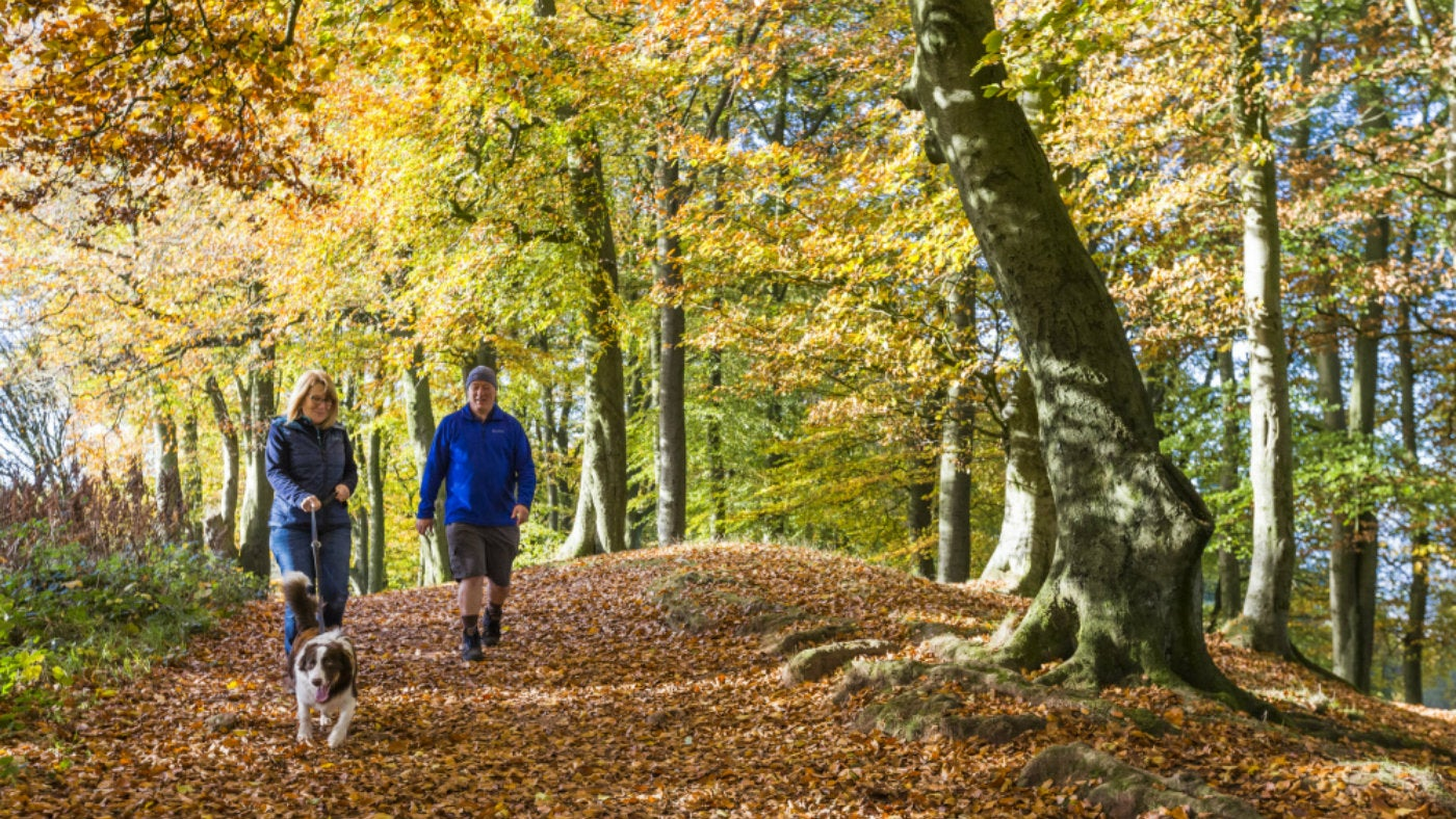 Places To Go Walking With A Dog Herts