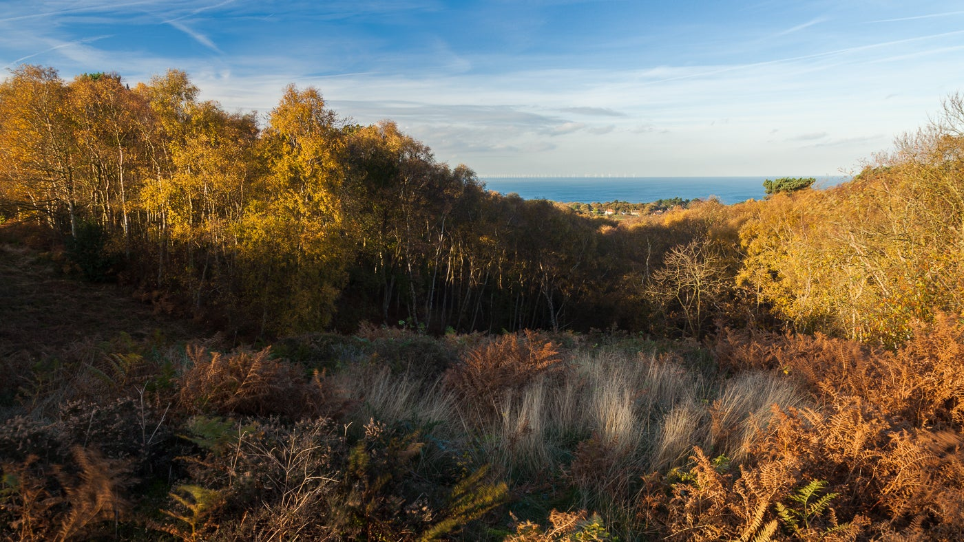 The North Sea through autumn leaved trees