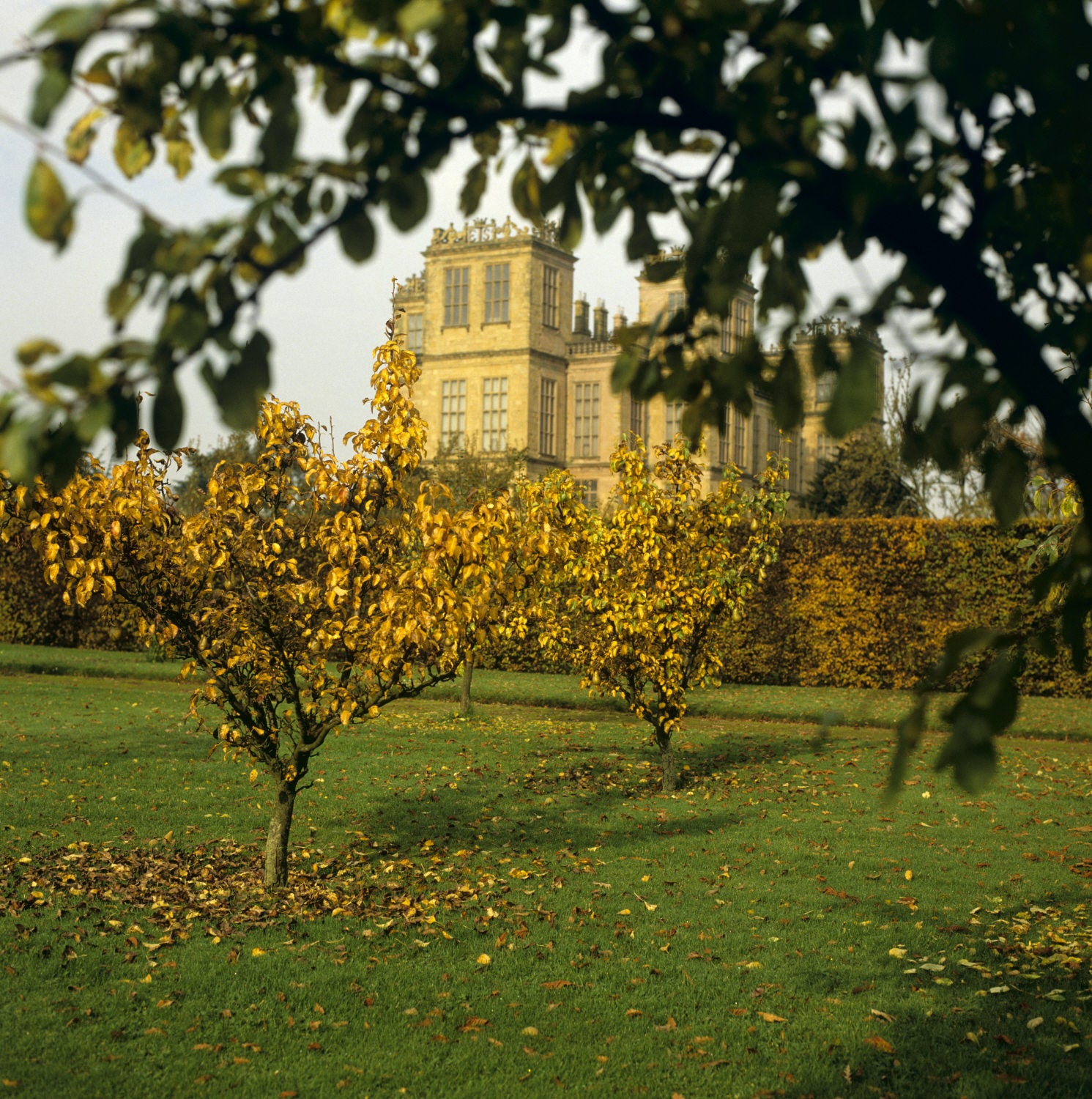 Hardwick Harvest And Orchards