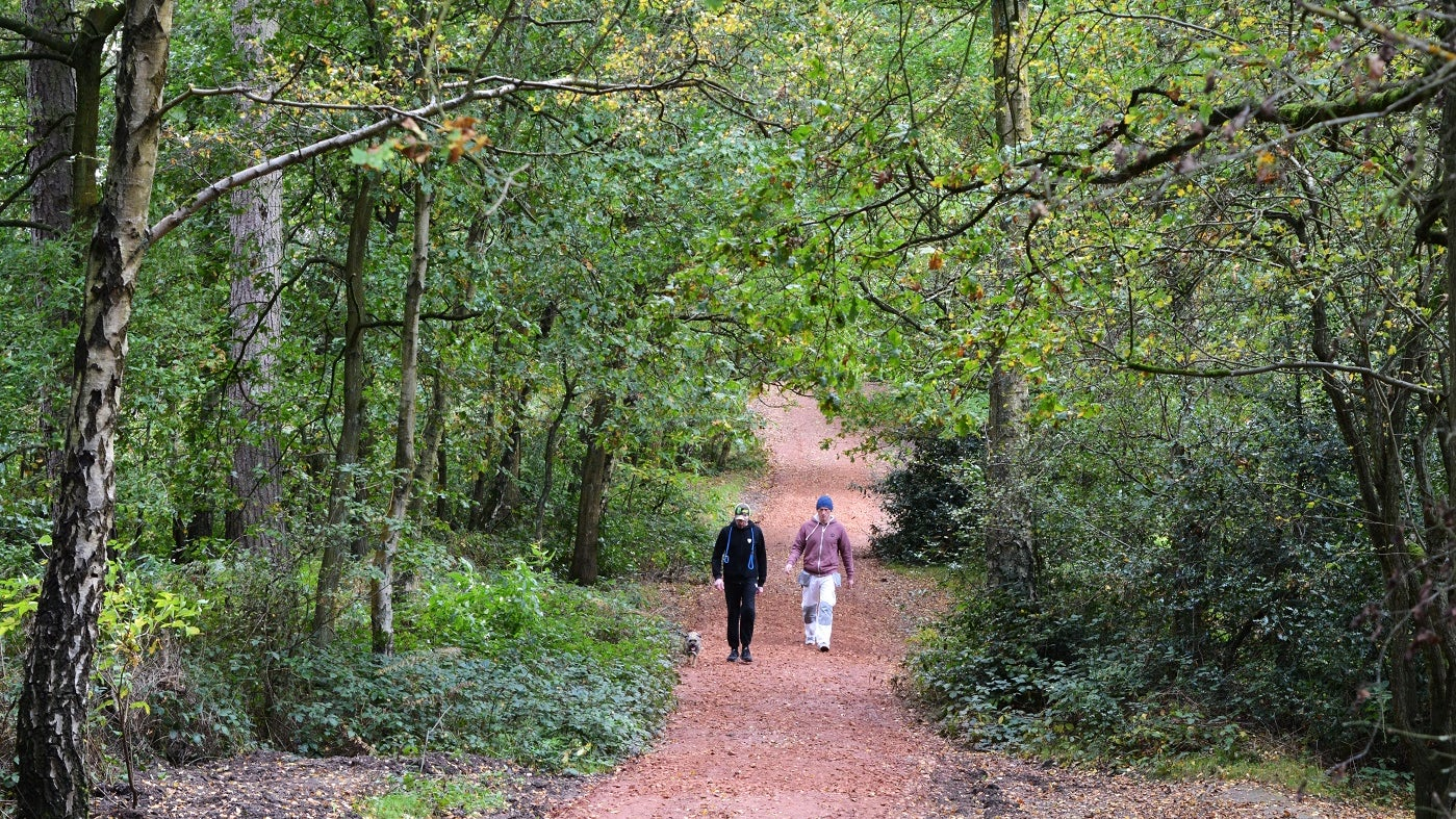 Dog walkers on centenary path at Kinver Edge