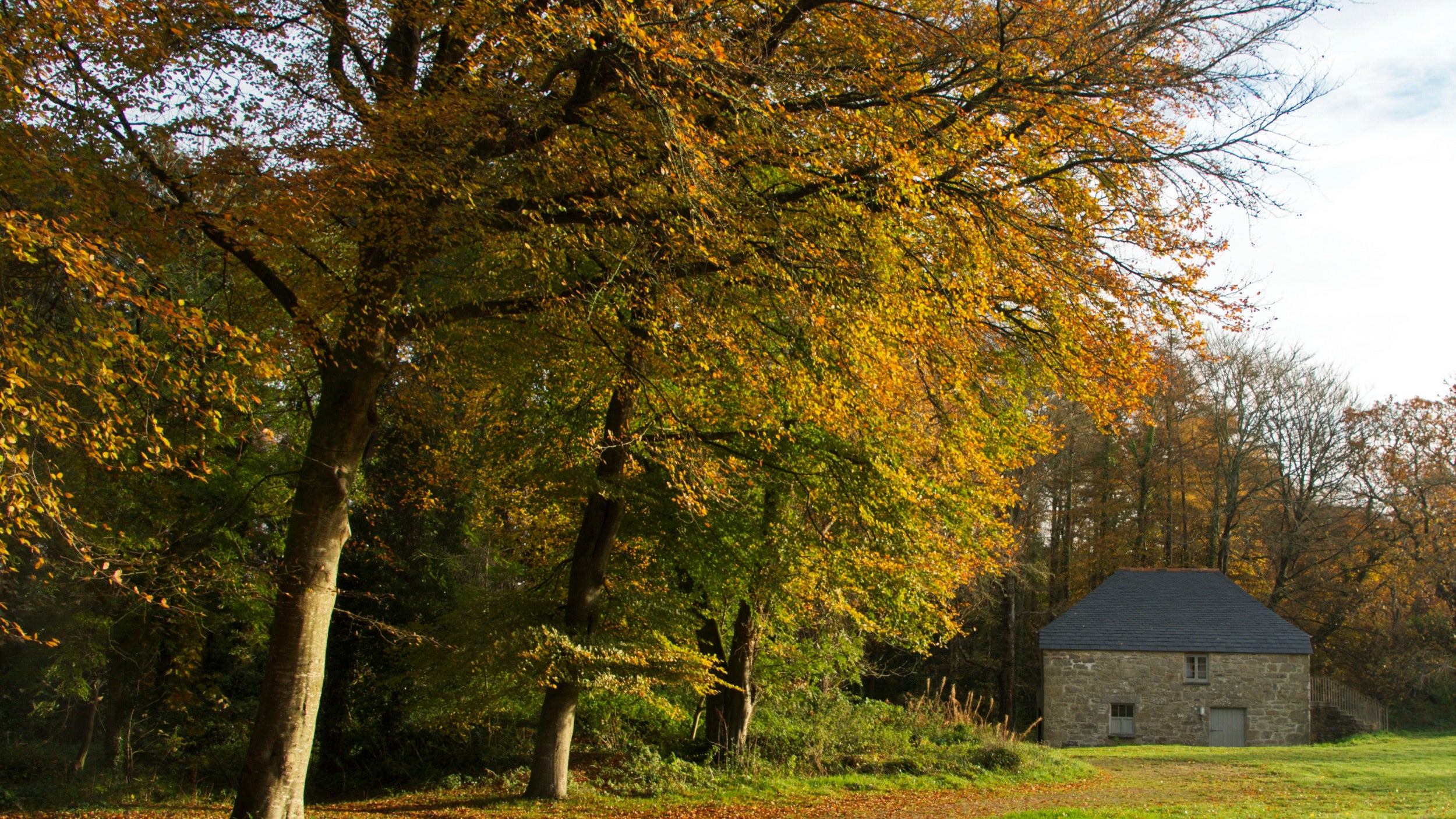 Autumn colour at Godolphin
