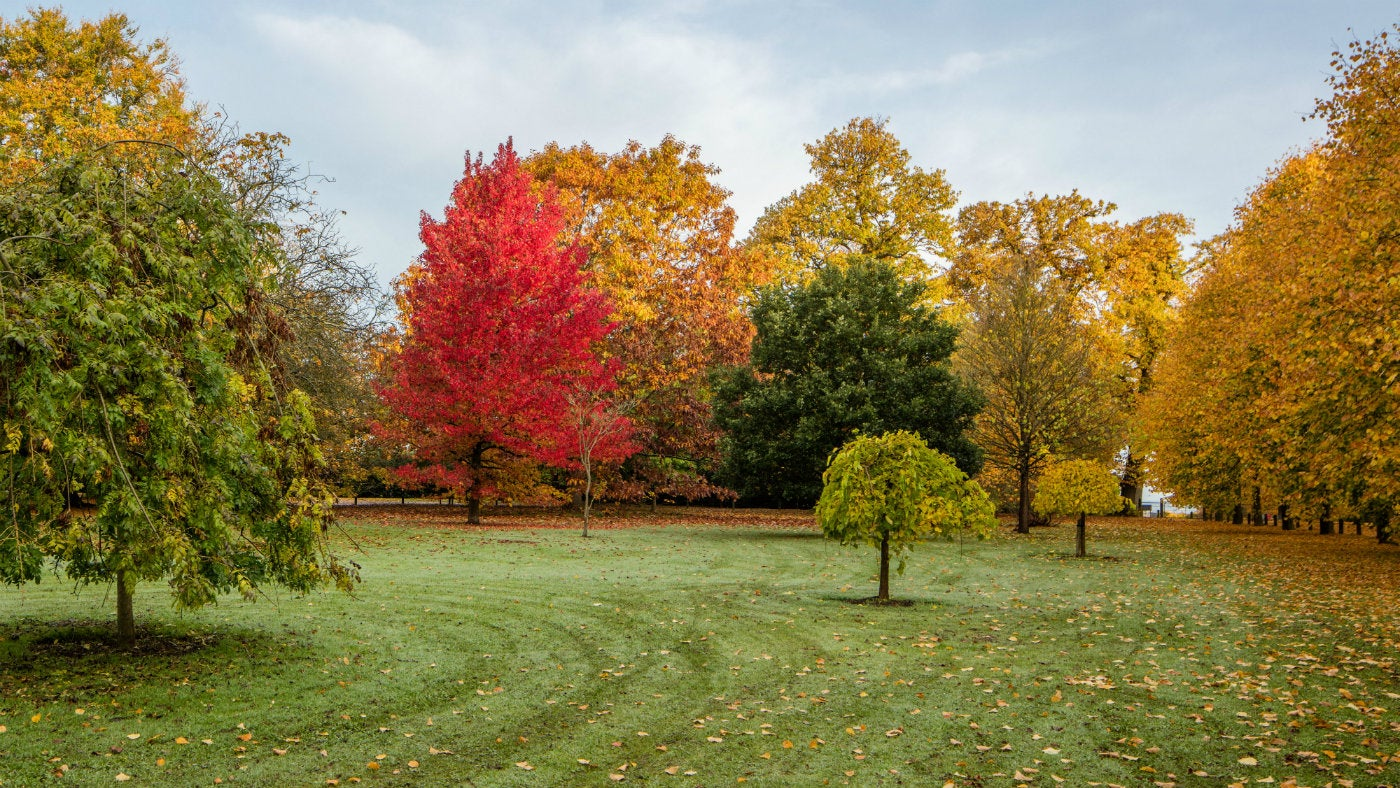 Trees with green, orange, yellow and red leaves on a neatly mowed lawn.
