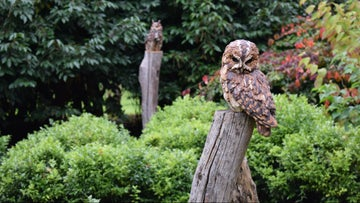 Two realistic looking owl sculptures on wooden posts
