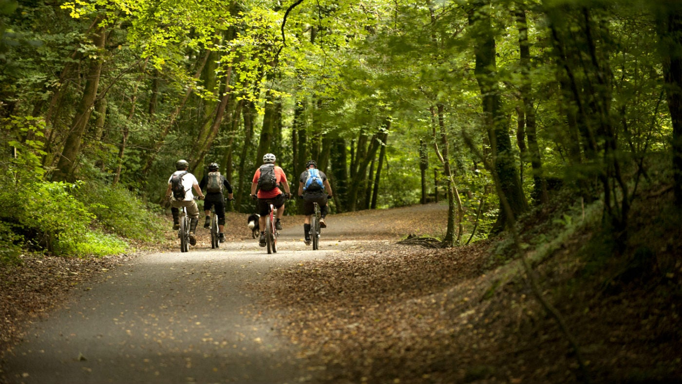 Cyclists cycling through Plymbridge