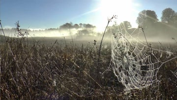 A spiderweb beautifully illuminated in the autumnal sunshine