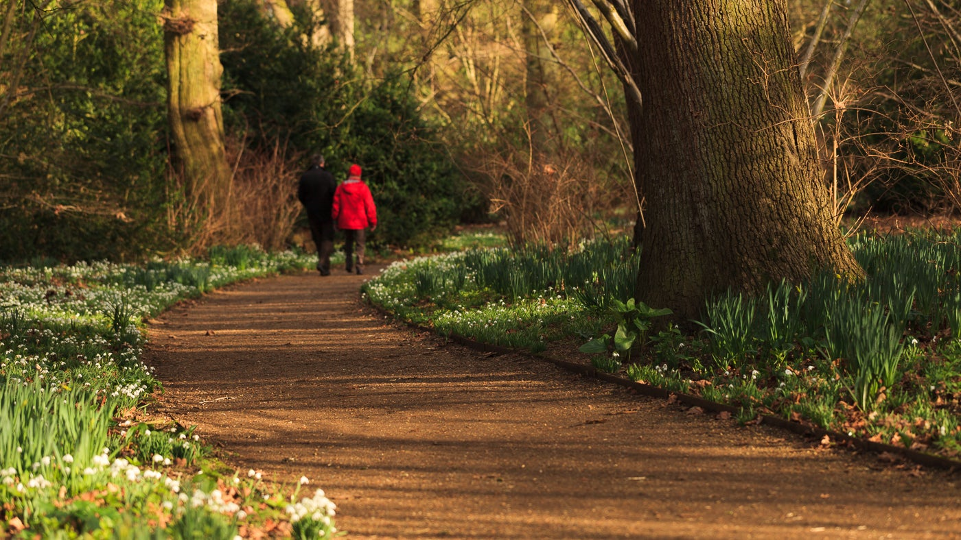 A couple walking on a path surrounded by snowdrops