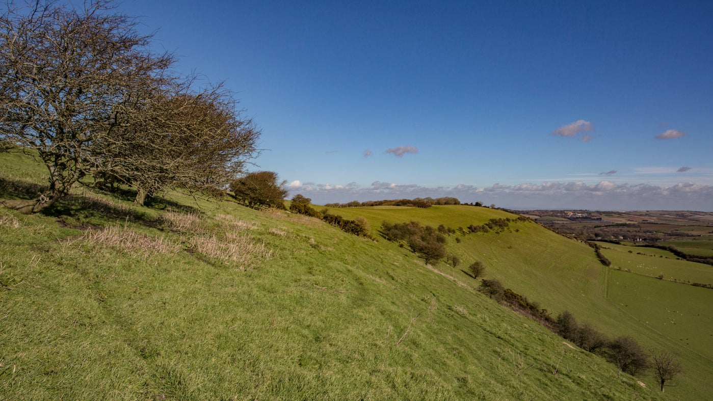 A view along the side of Chillerton Down in angled winter sun
