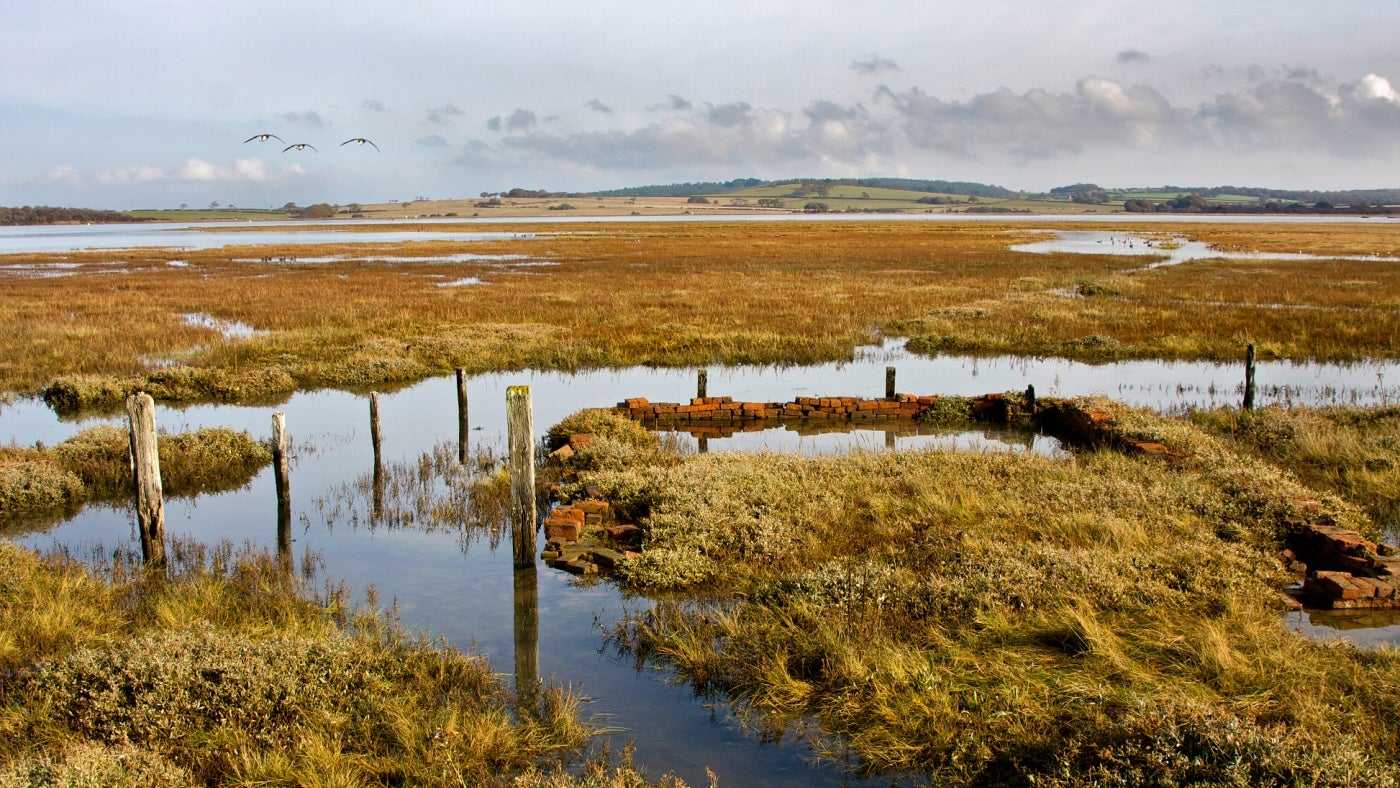 Low tide on Newtown saltwater marsh on a calm winter's day