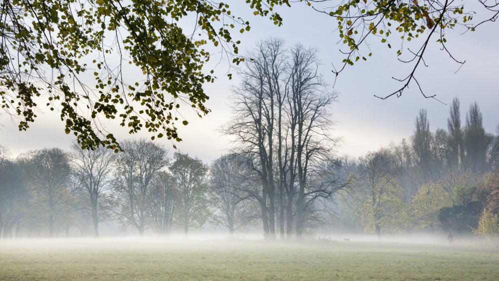 Mist rising over a meadow at Morden Hall Park