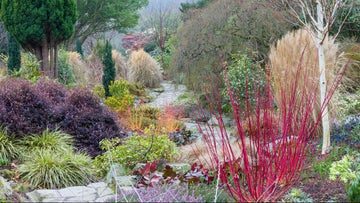 The Winter Garden at Bodnant Garden