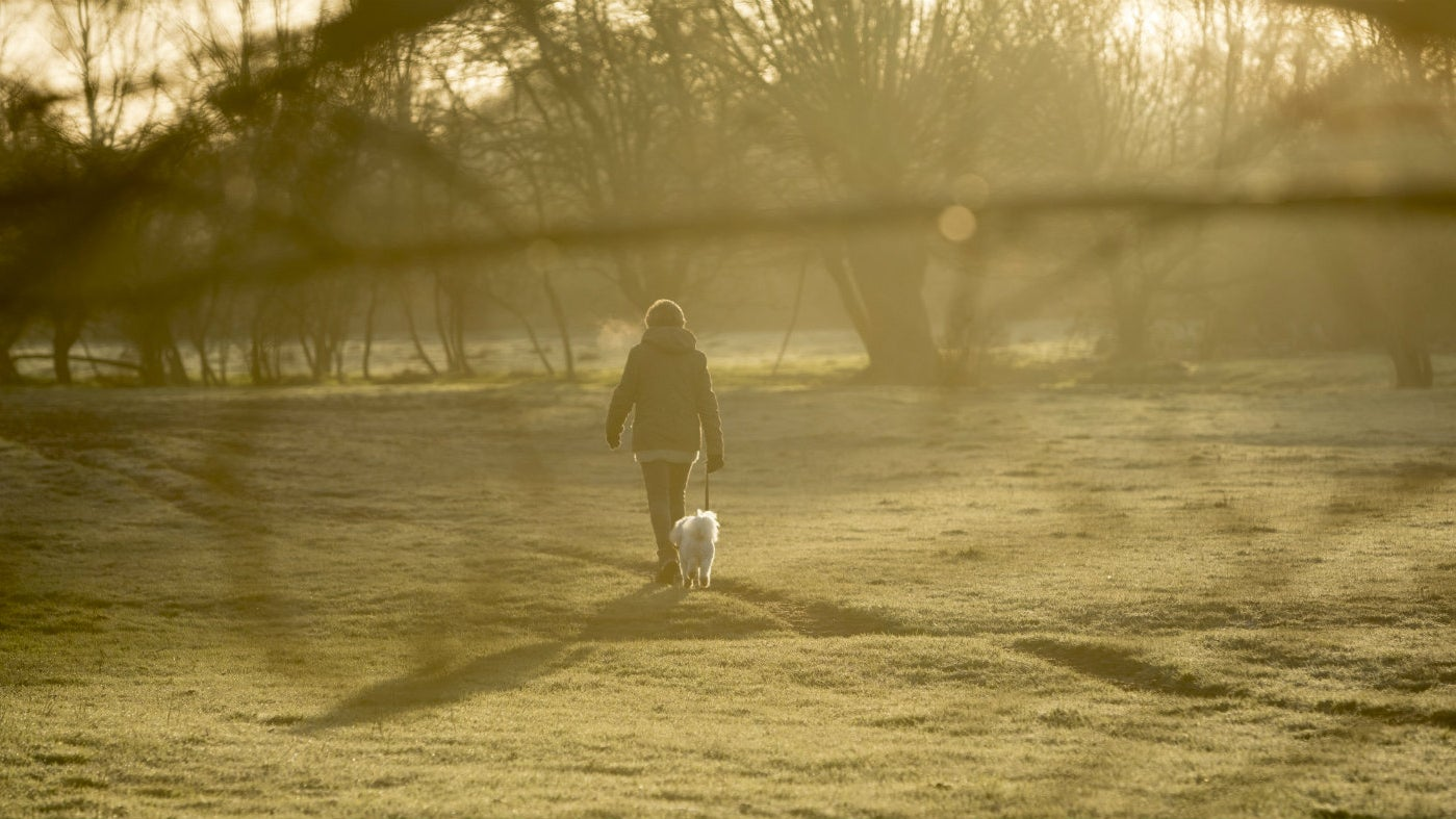 A person walking in a field in the morning sunshine