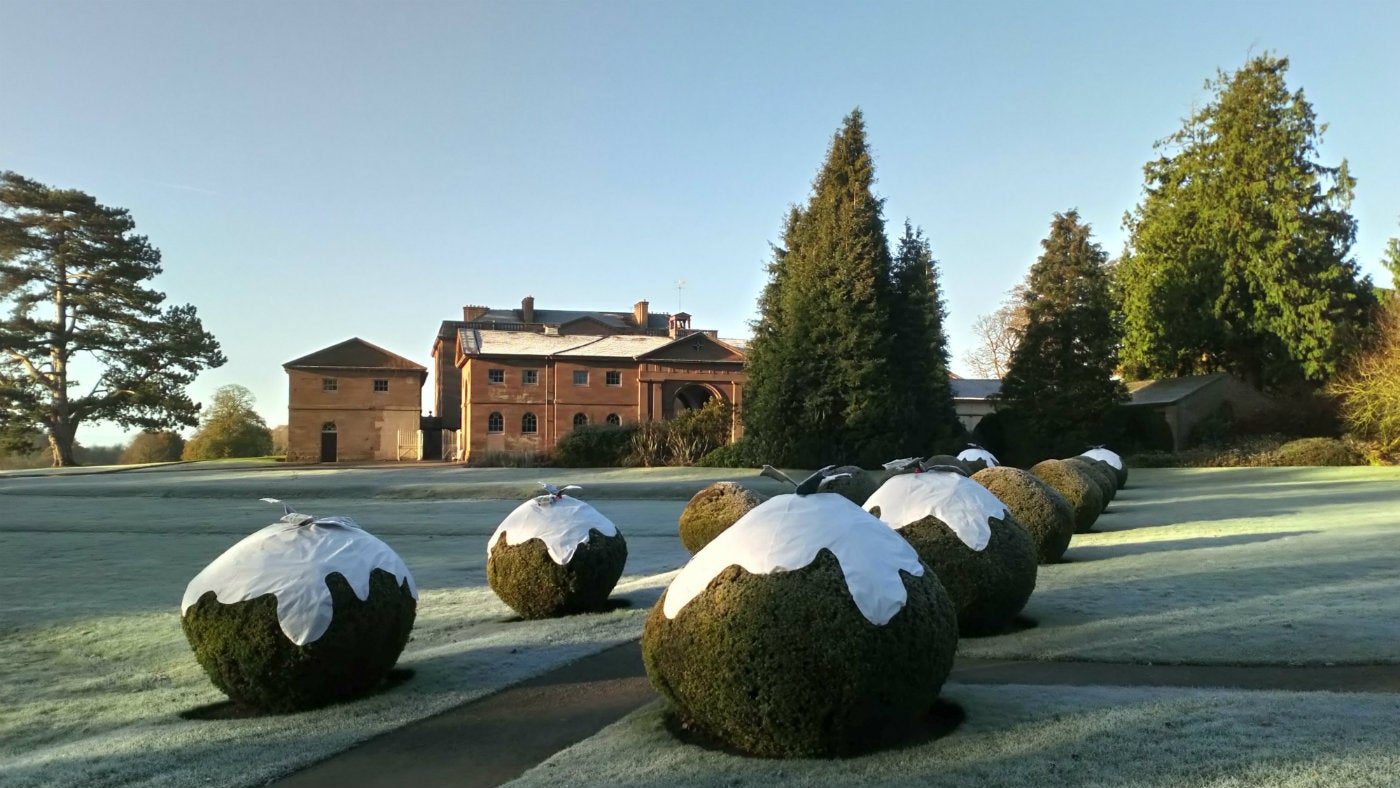 Berrington Hall's Christmas pudding hedges with the mansion behind them