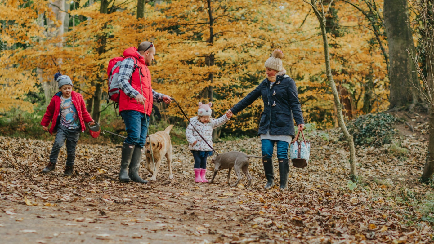 Bring family and friends on a walk at Erddig