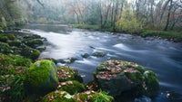 The River Dart, Holne Woods, Devon
