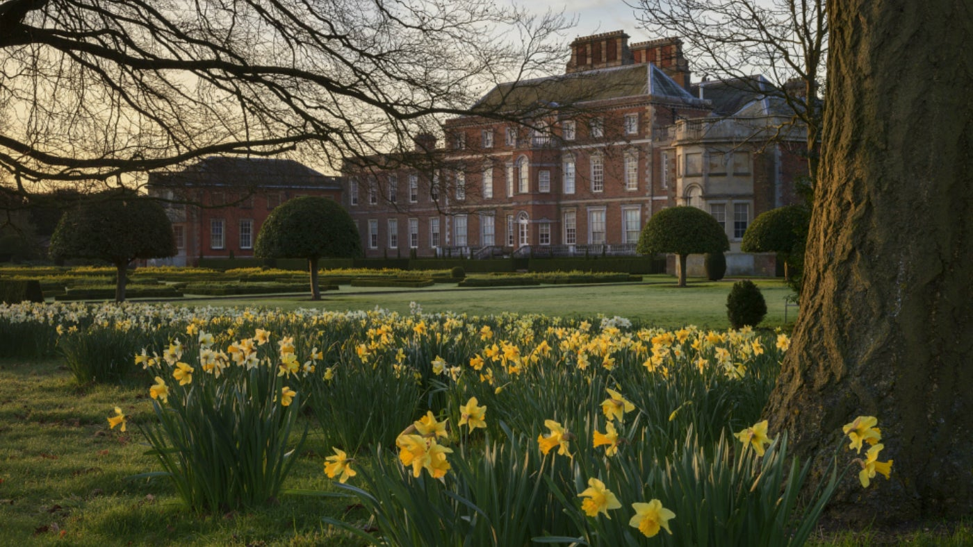 Daffodils in front of Wimpole