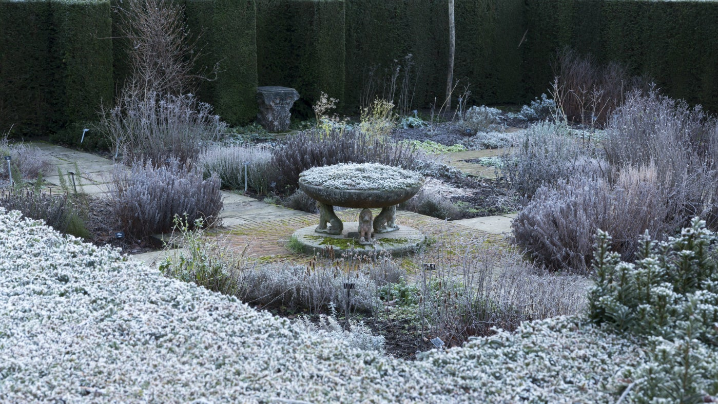 A winter's day in the herb garden