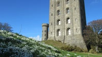 Snowdrops at Penrhyn Castle on a beautiful winter's day