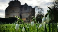 Snowdrops, Chastleton House, Oxfordshire