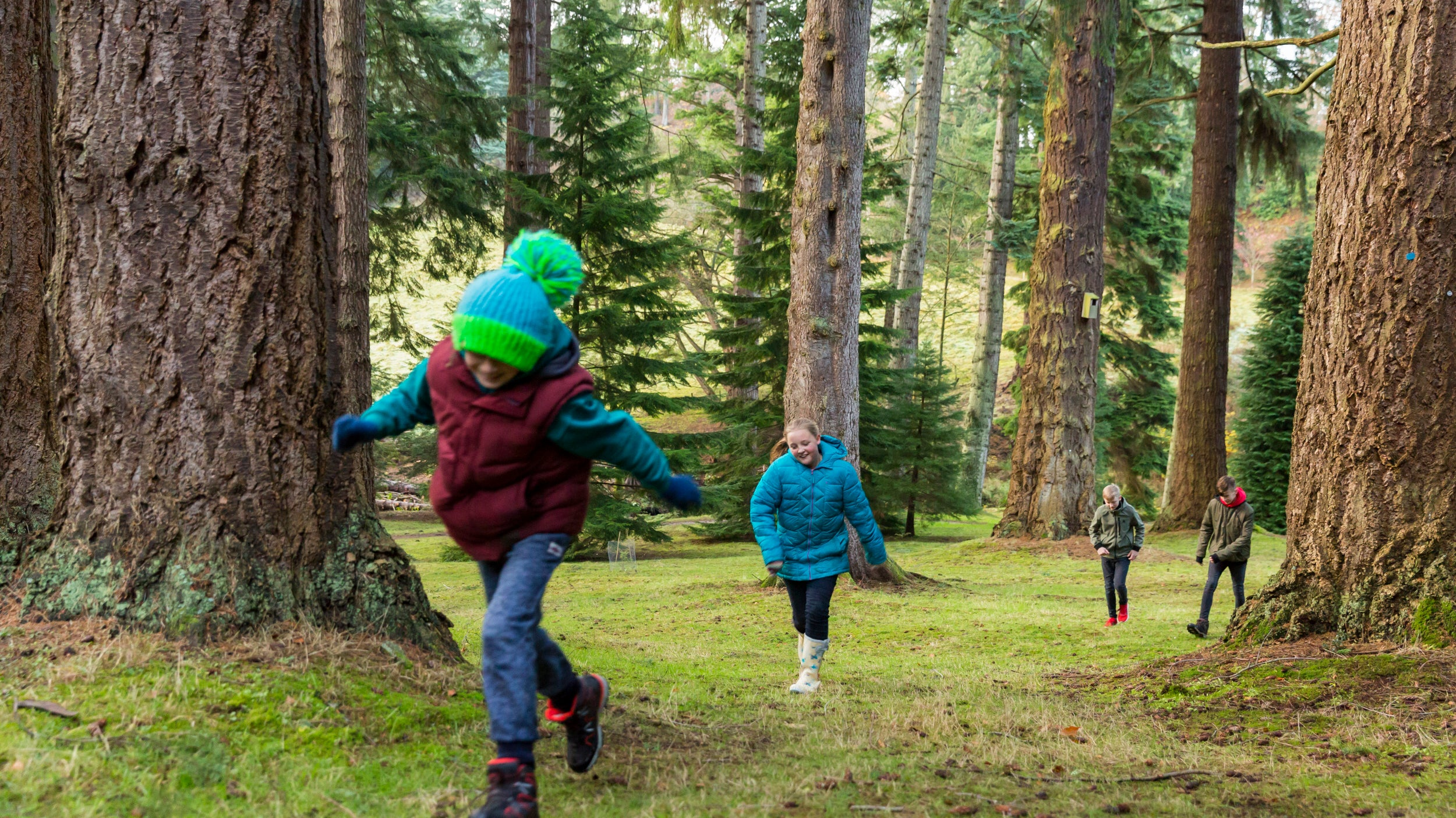 Children run through the Pinetum