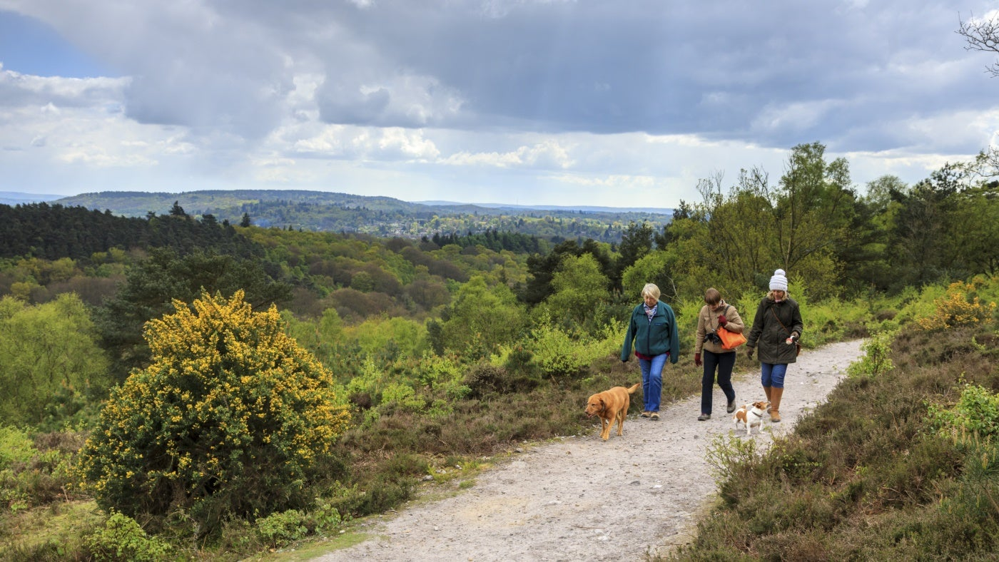 Visitors walking at Hindhead Commons and the Devils Punch Bowl Surrey