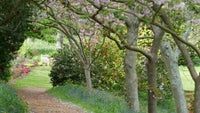 A path below trees that are starting to blossom in the gardens at Mottistone