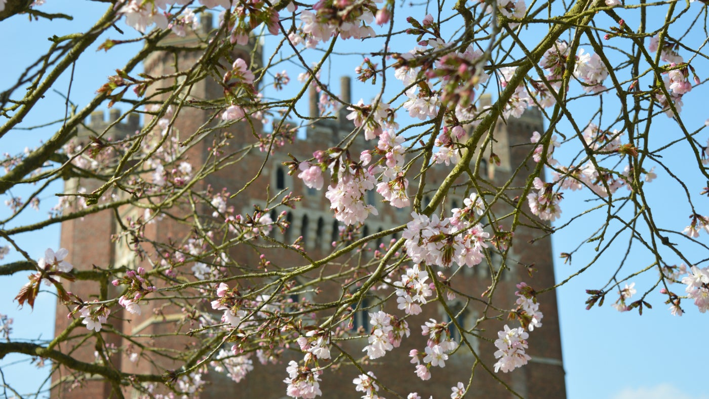 Tattershall Castle in sping time