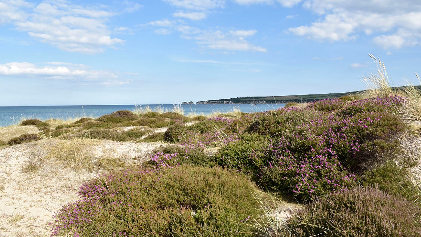 Dune heath at Studland Bay