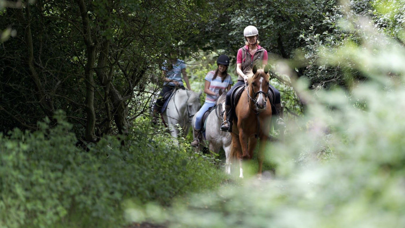 Horse riding through the woods