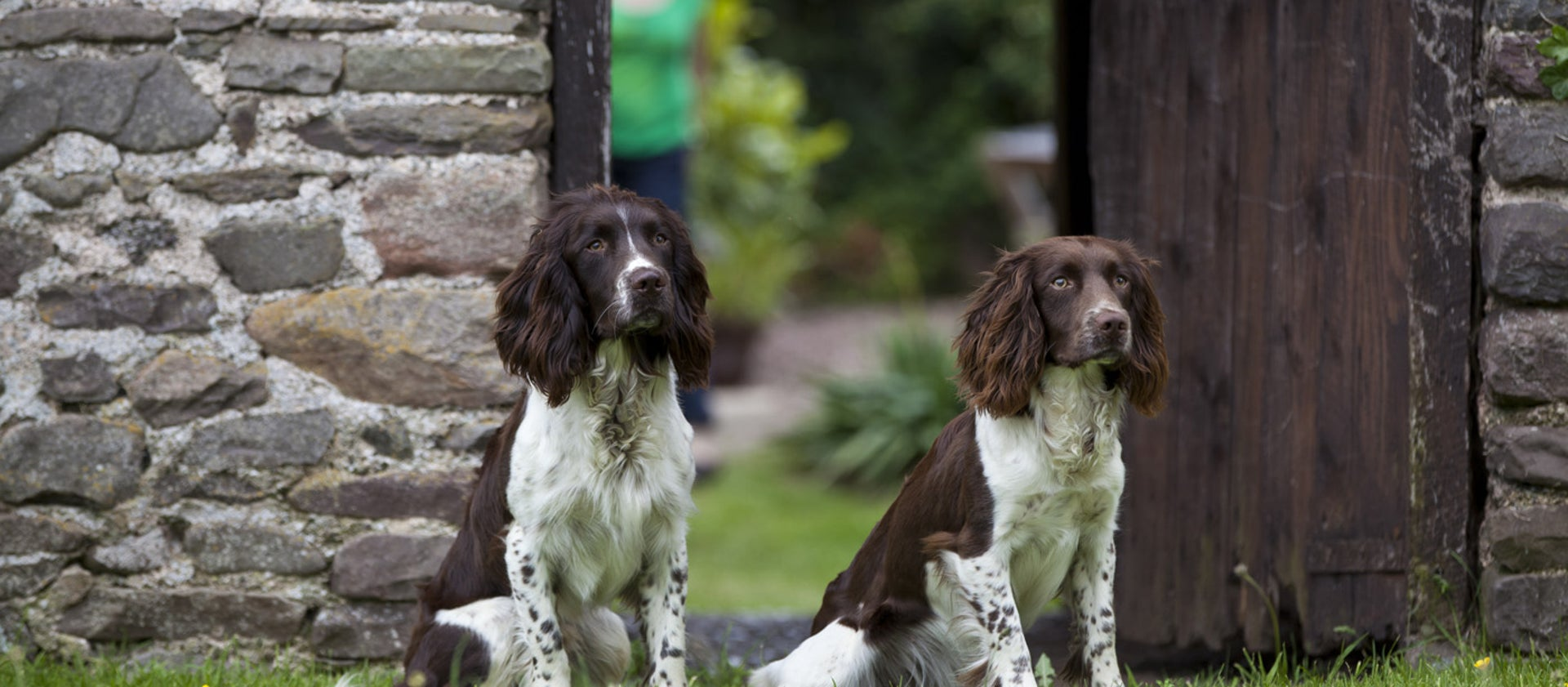 Surprising Dog Friendly Holiday Cottages National Trust Home Interior And Landscaping Elinuenasavecom
