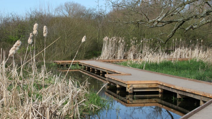 Morden Hall Park's wetland boardwalk in spring