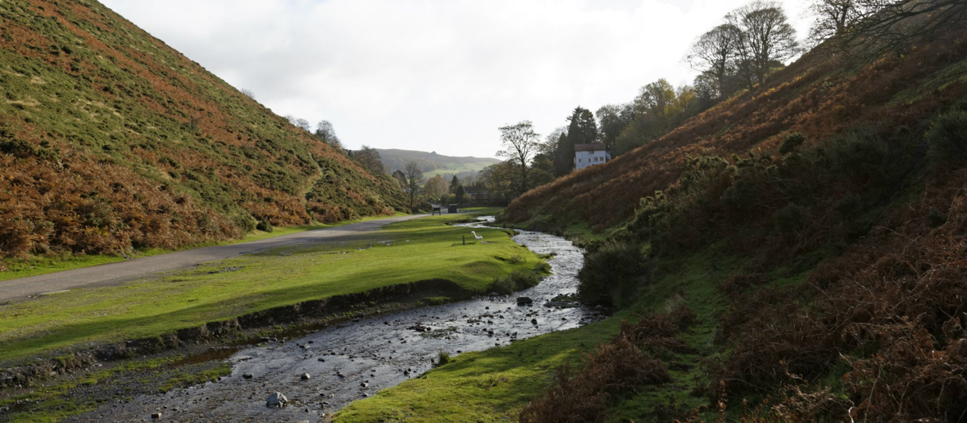Spring Things on the Long Mynd | National Trust