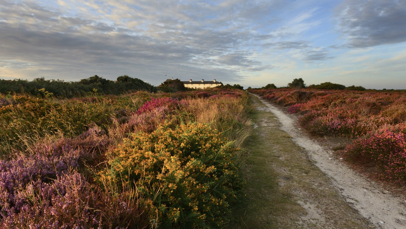 Dunwich Heath early morning landscape