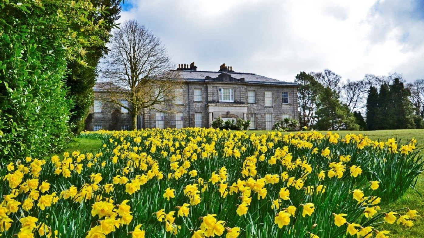 Admire the countless display of yellow daffodils at The Argory
