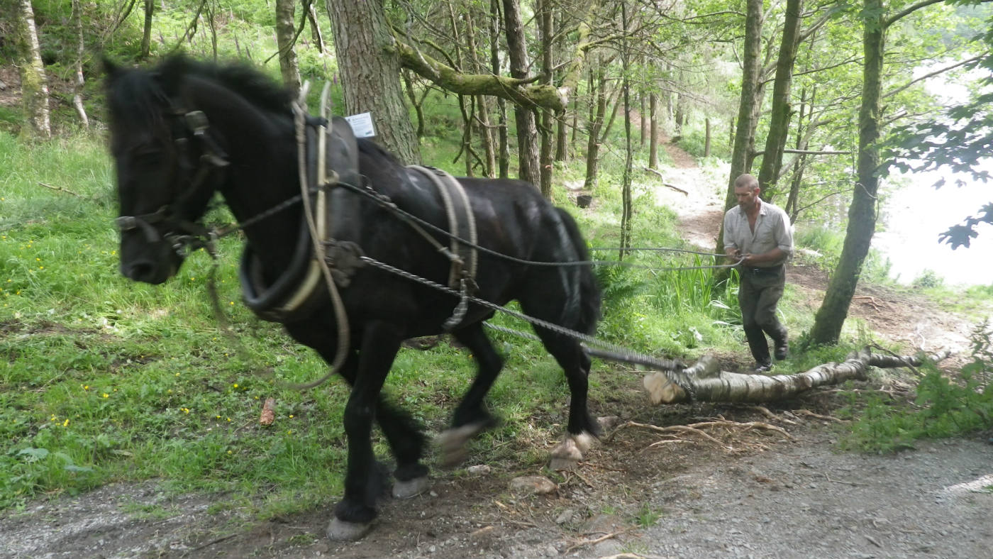 George and Charlie the horse removing felled timber from this sensitive landscape