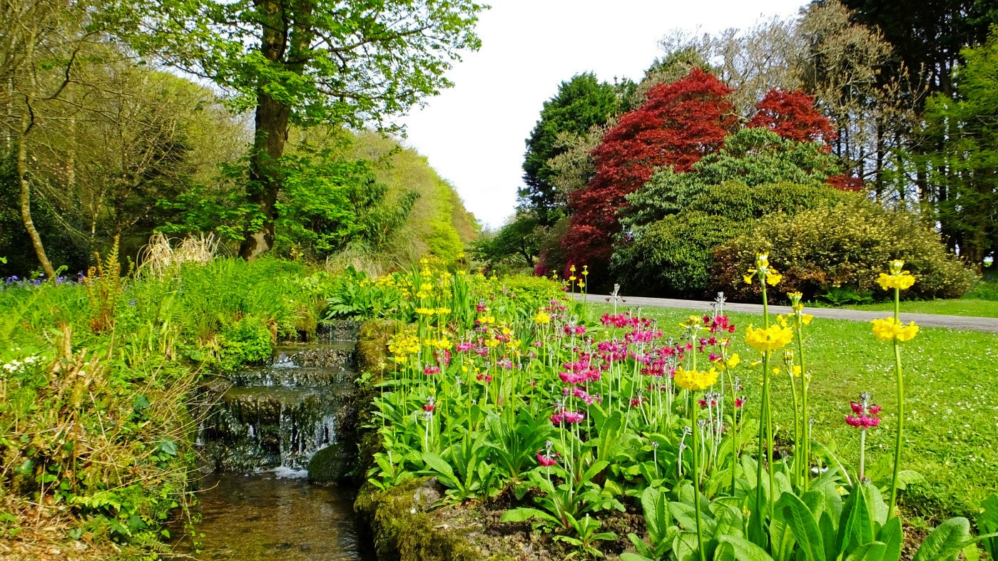 Stream border at Trengwainton garden in Cornwall