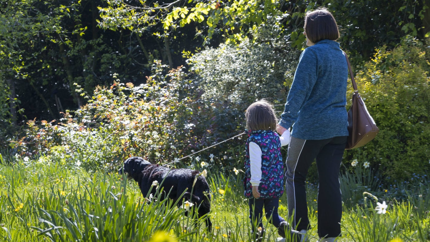 A young girl and mother walking dog in summery woodland