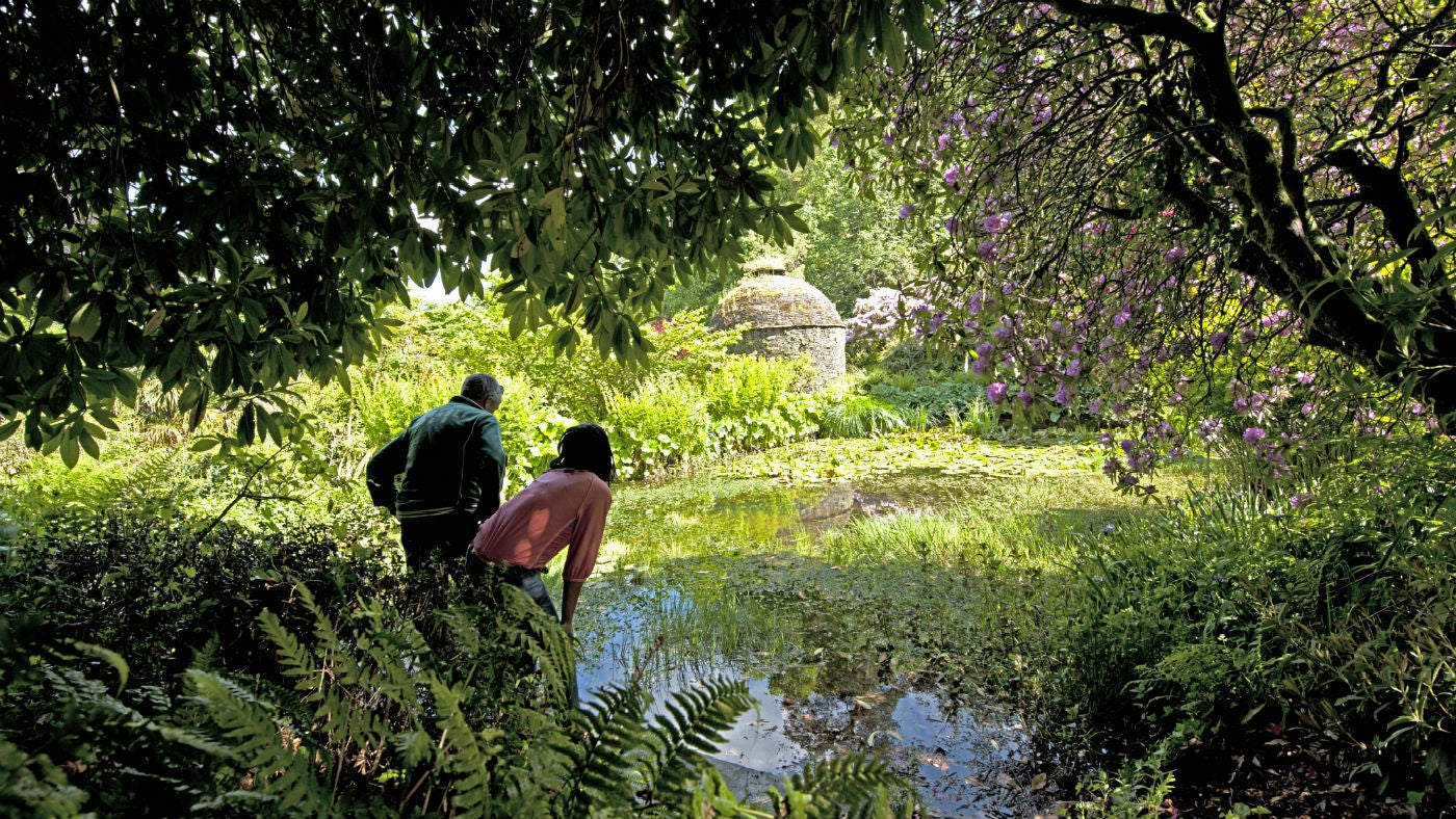 A couple looking across the medieval stewpond in the Valley Garden at Cotehele
